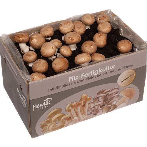 Große XXL Steinchampignon Pilzkultur I Hawlik Pilzbrut I kinderleicht Pilze selber züchten I ohne Vorkentnisse