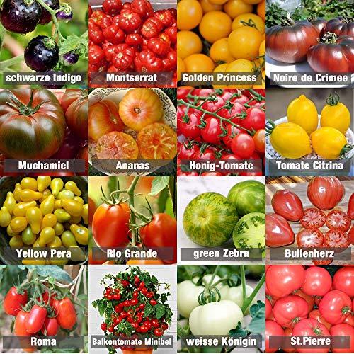 Bio Samen Gemüse kaufen
