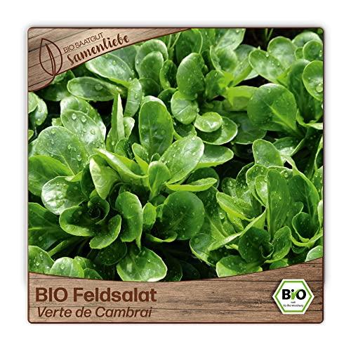 500 Feldsalat-Samen BIO zertifizierte Sorte Verte de Cambrai Acker-Salat Saatgut valerianella ganzjährig winterhart