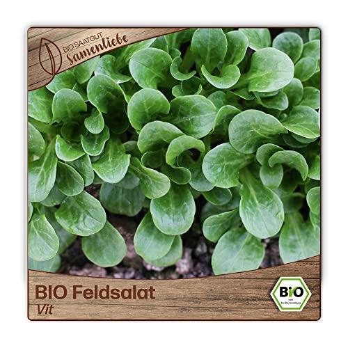 500 BIO Feldsalat-Samen Marktgärtner Sorte VIT valerianella locusta Acker-Salat Voglersalat Saatgut ganzjährig winterhart