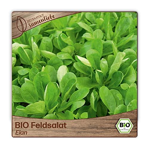 500 Feldsalat-Samen BIO zertifizierte Sorte Elan valerianella locusta Acker-Salat Voglersalat Saatgut ganzjährig winterhart